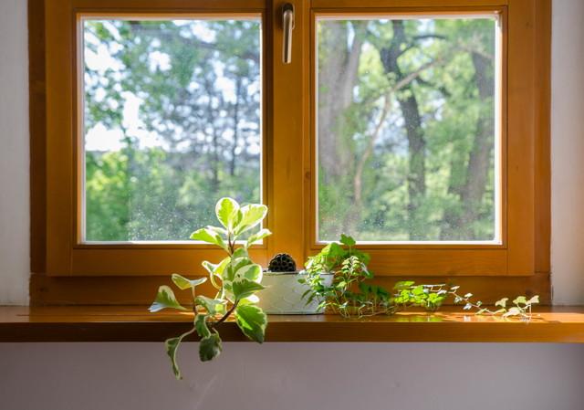 植物が飾られた窓