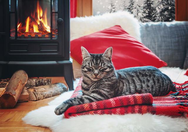 暖房であたたまる猫