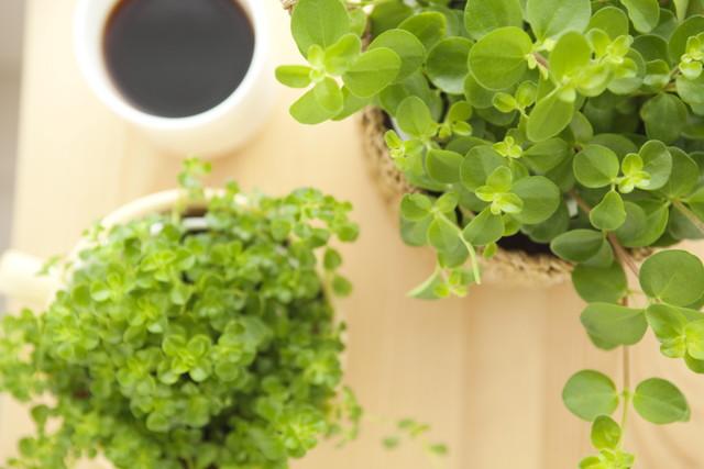 観葉植物とコーヒーカップ