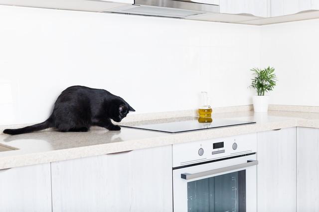 キッチンと黒猫