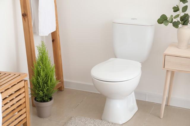 トイレの観葉植物