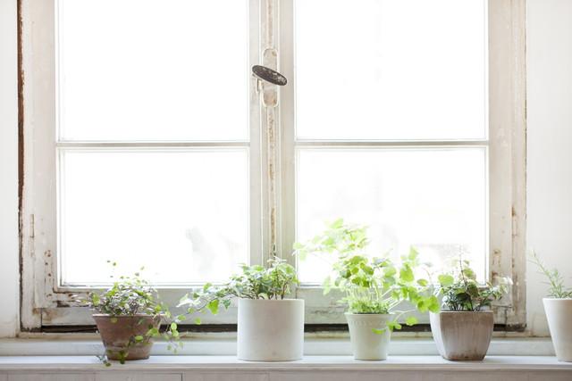 日光を浴びて育つ観葉植物