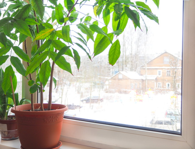 窓際に置いてある観葉植物