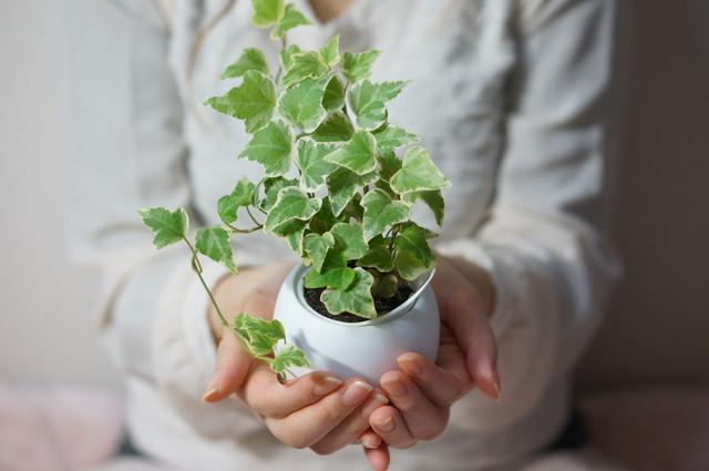 観葉植物を持つ女性
