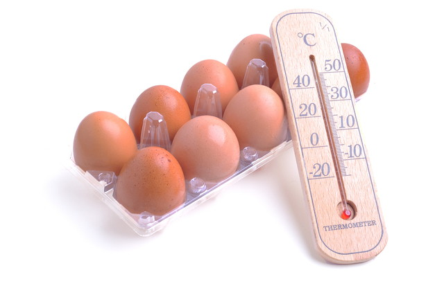 卵と温度計