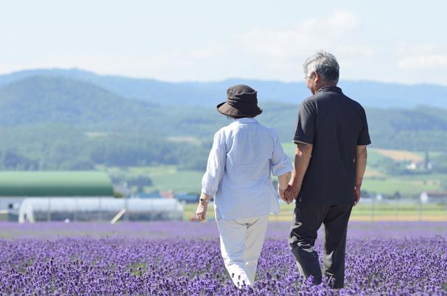 ラベンダー畑を歩く老夫婦