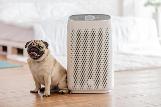 犬とベッドルームの空気清浄機