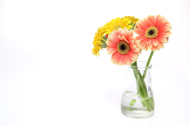 ガラス花瓶に挿したガーベラ