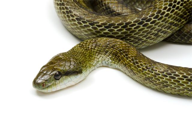 ヘビのアップ