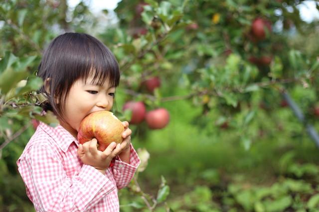 とれたてのりんごを食べる少女