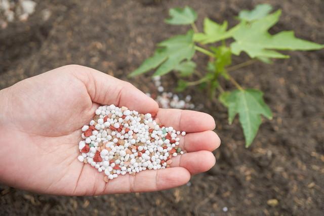 化学肥料を撒く