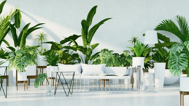 部屋にたくさんある観葉植物