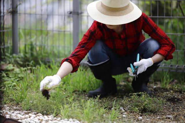 庭を掃除する女性
