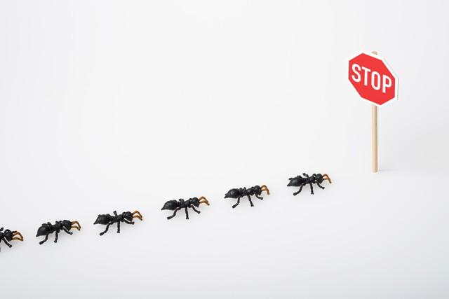 蟻の列とSTOPと書かれた標識