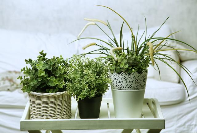 3つの観葉植物