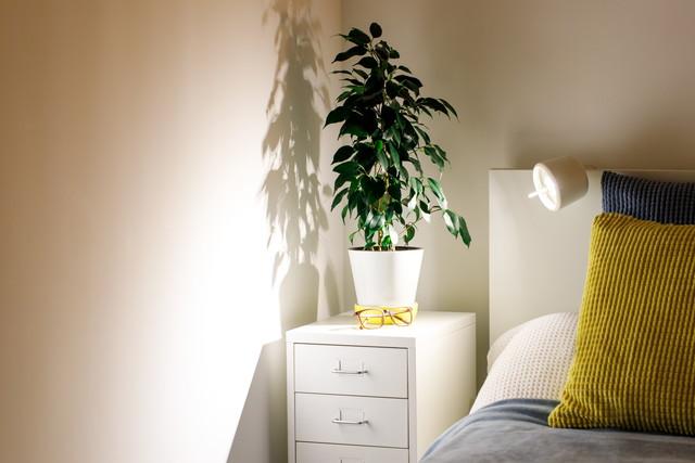 枕もとの観葉植物