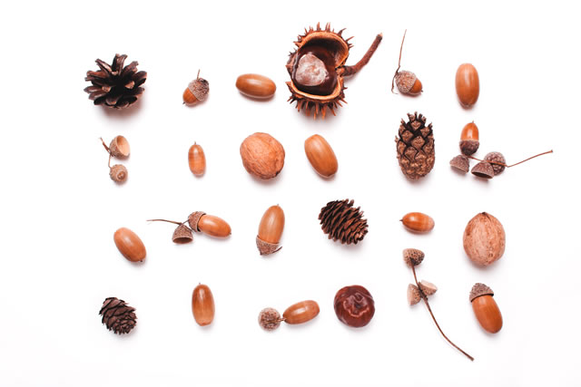 Composition of chestnut, pine cones, acorns on a white background. creative concept of autumn.