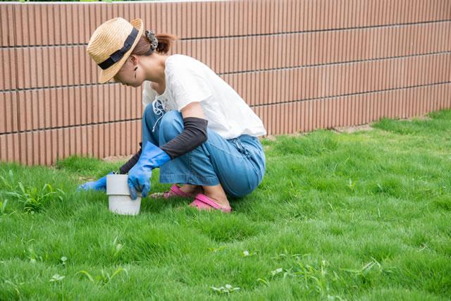 草むしりする女性