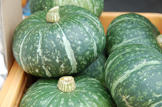 大量のかぼちゃ