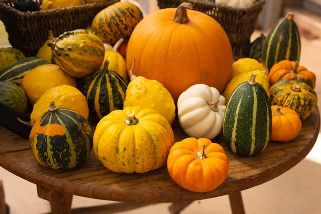 たくさんの種類のかぼちゃ