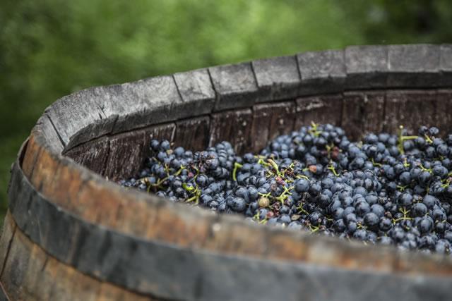 ブドウを木樽で熟成させる