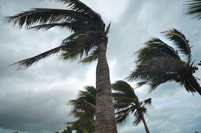 風にあおられる木