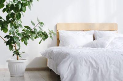 大きな観葉植物と木製フレームのベッド