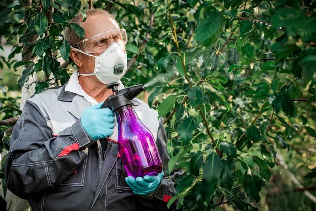 Worker sprays organic pesticides on plants