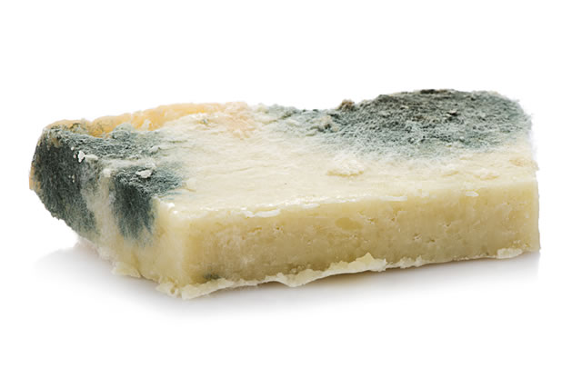 White background studio image of a decayed rotten cheese