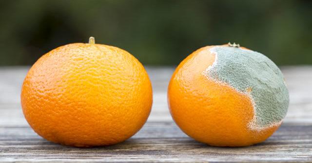 Fresh and moldy orange mandarin, web banner