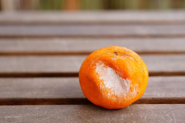 Closeup shot of a rotten tangerine on a wooden surface