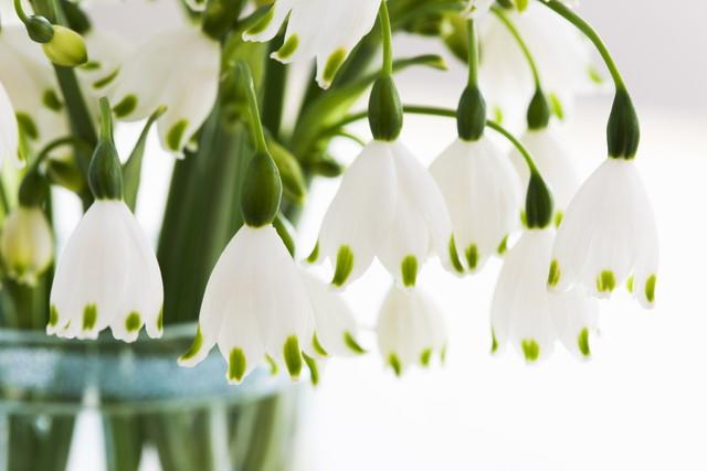 スズランスイセンの花
