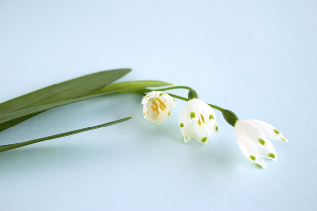 花 スズラン水仙