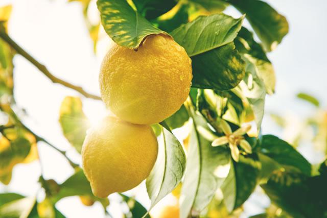 光の中のレモン