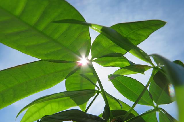 太陽と葉っぱ
