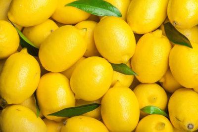 収穫したレモン