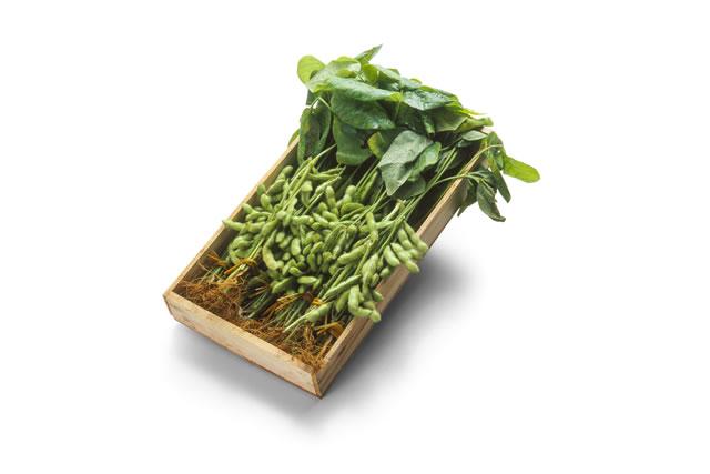 木箱に詰めた枝豆