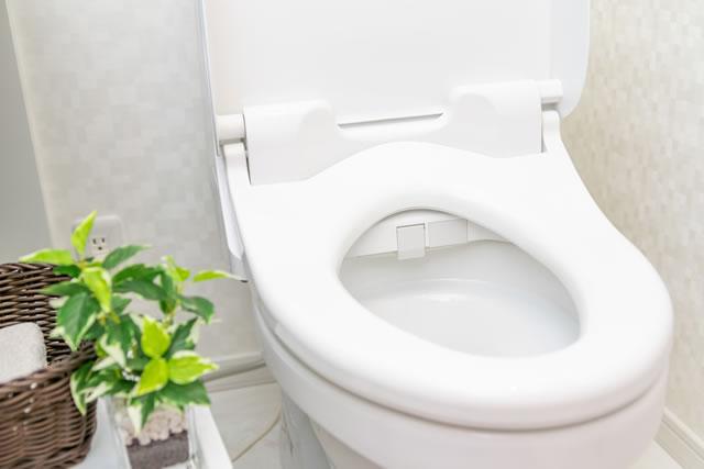 植物が置いてあるきれいなトイレ