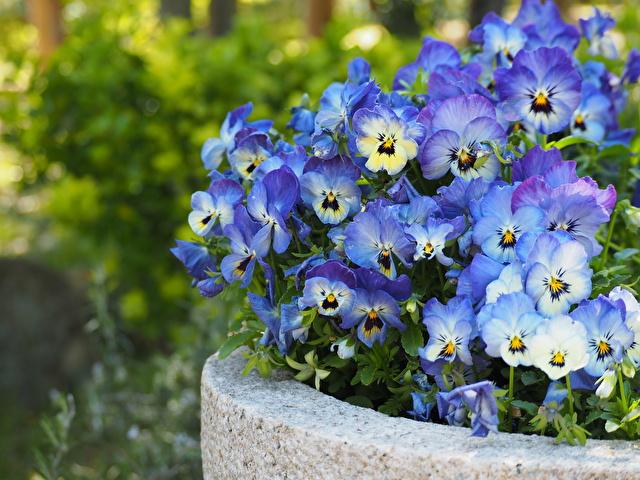 鉢に入った花