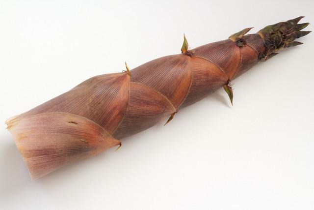 淡竹(はちく)