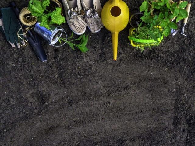 バジルと栽培道具