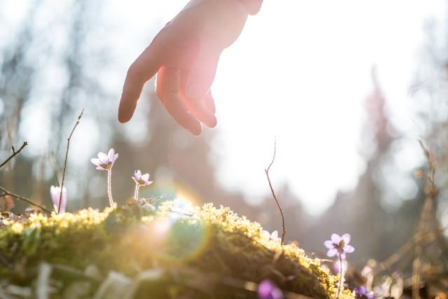 太陽に照らされた青い花の上の男の手