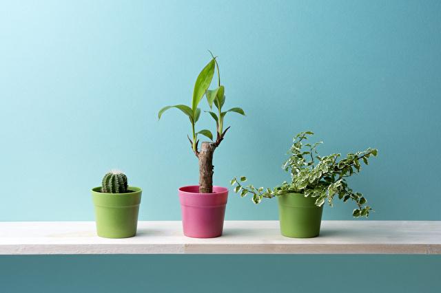 棚の上に置いてある観葉植物
