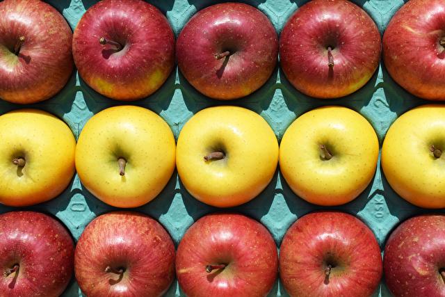 きれいに並べられたりんご サンふじ(赤)とシナノゴールド(黄色)