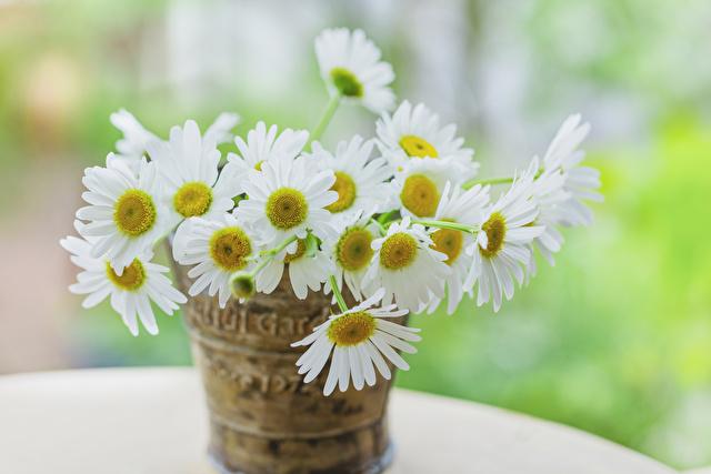 籠に入ったマーガレットの花