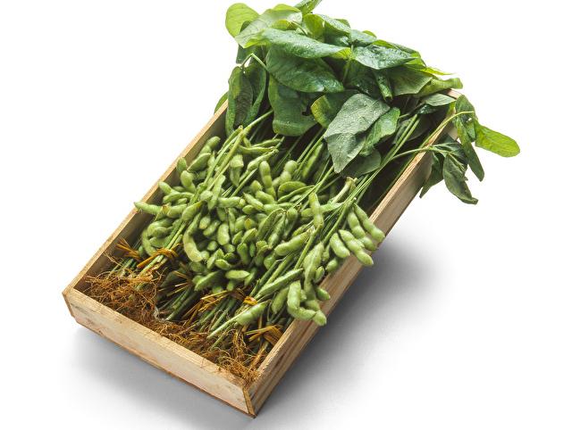 収穫したての枝豆