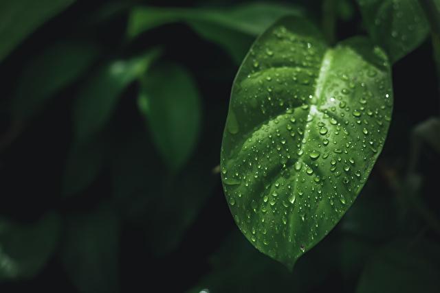 観葉植物葉水