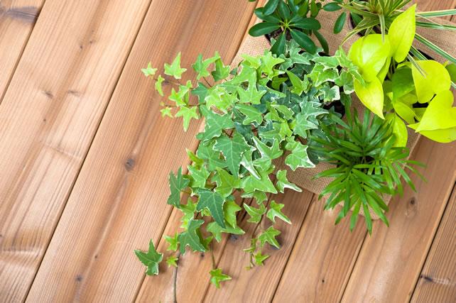 ポトスと複数の観葉植物