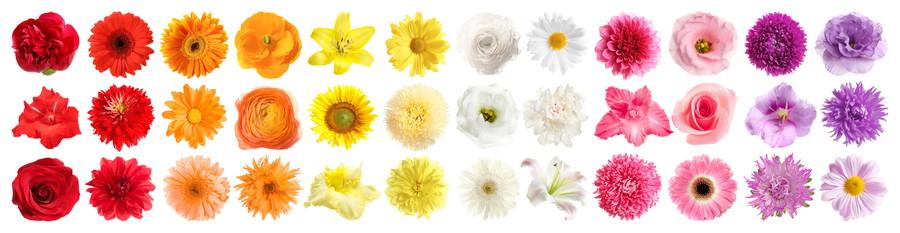 花ごとの育て方を熟知する