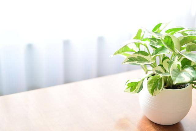 初心者向けの観葉植物とは